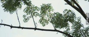 bomen met waterlot